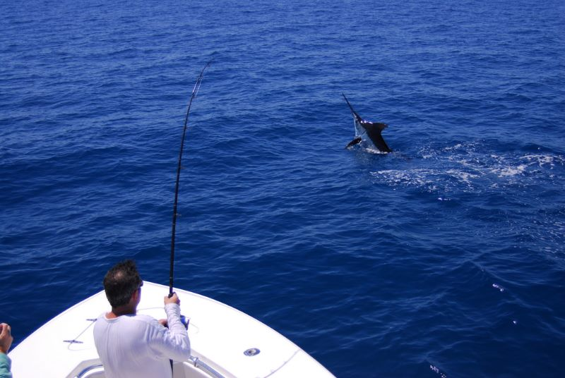 Catching a blue marlin on a Stuart Florida gishing charter