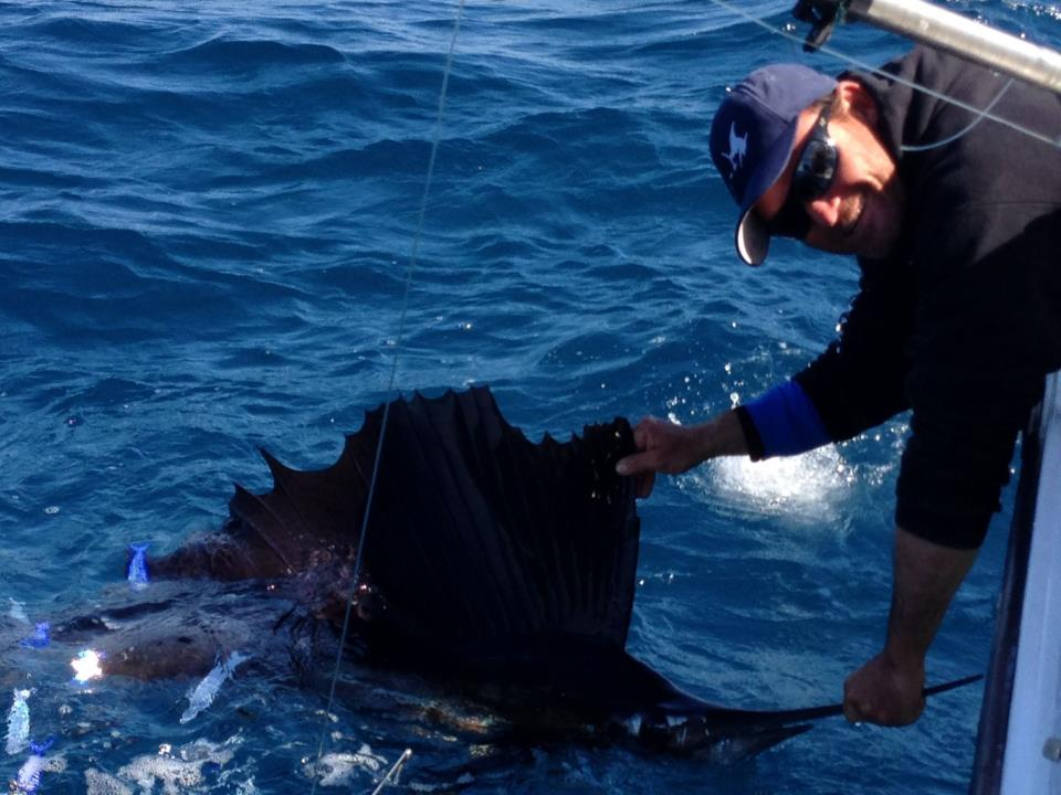 Great Fl. Sailfish charters out of Sailfish Marina of Stuart.