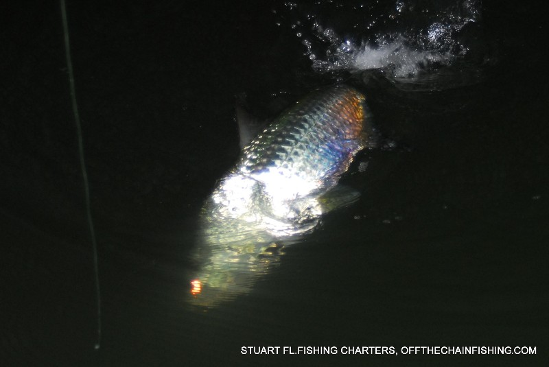 Releasing a tarpon during a Stuart Florida near-shore fishing charter.